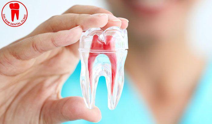 Tủy răng là nơi chứa mạch máu nuôi dưỡng răng